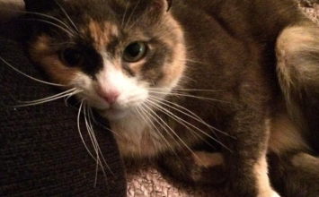 MISSING: Peaches, a tortoiseshell cat, was last seen in the Keresley Green Road area