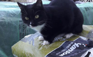 MISSING: Otis the cat, last seen in Bubbenhall on Friday