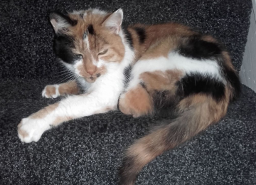 MISSING: Kitty, 21-year-old cat, gone missing from Wyken